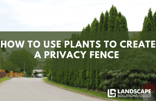 How To Use Plants To Create A Privacy Fence